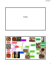 Module 3 Unit 9 - Fruit Composit PPT for class.pdf