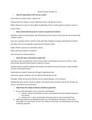 Chapter 8-9 Nervous System Study Guide.docx