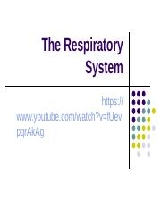 The Respiratory System.ppt