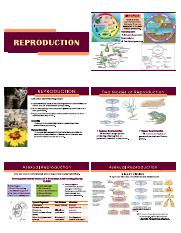 REPRODUCTION.pdf
