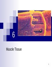 2404.AP4.6 Muscle Tissue.ppt