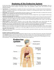 Anatomy of the Endocrine System.pdf