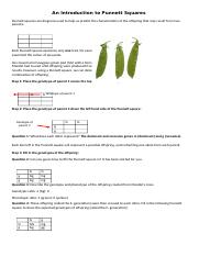 13 Intro_to_Punnett_Squares[1].docx