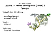 Lecture on Animal Development and Sponges