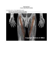 Lower limb muscke action .docx