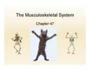 Copy of 47_musculoskeletal outline_class