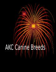 Akc Canine Breeds