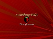 Strawberry DNA.Analysis PowerPoint
