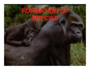 7 FORMATION OF SPECIES