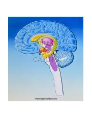illustration-of-anatomy-of-limbic-system-of-brain-1113972.jpg