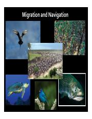 Tuesday 5:10:16 Migration and Navigation.pdf