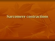 Sarcomere contractions