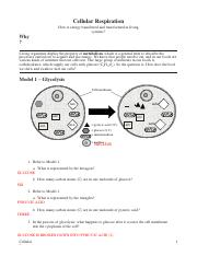13 Cellular Respiration-KEY (1) - Cellular Respiration How ...
