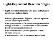 Light-Dependent Reaction Stages (2)-2