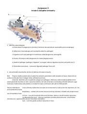 Assignment 5 Innate & Adaptive Immunity complete.docx