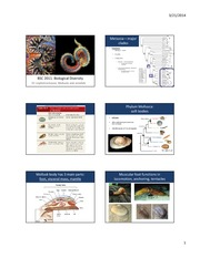 BSC2011 Biology 2, Ch. 33 Invertebrates Part 2