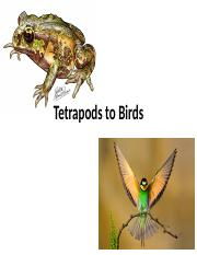 23-Tetrapods to Birds.ppt