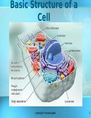 cell structure revised