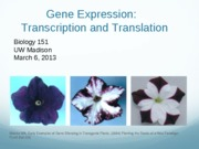 Gene Expression Lecture 4
