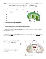 Photosynthesis worksheet - Name Date Period Worksheet Photosynthesis ...
