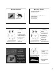 Lecture 12 - Black flies 2019 - notes.pdf