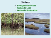 2013_Wetlands_Gulf+of+Mexico
