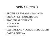 ANAT 1607 Spinal Cord Powerpoint