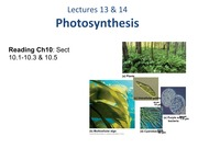 Lecture 13&14_Photosynthesis