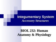 Integumentary System Accessory Structures