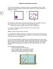 Diffusion and Osmosis Worksheet KEY 08 - Diffusion and Osmosis ...