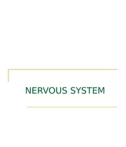 Nervous System Fall 2007