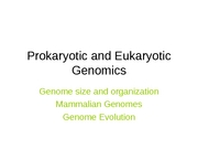 Prokaryotic and Eukaryotic Genomes,Fall 07 Tsquare