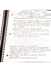 Structure and Functions of Nervous System Cells Notes