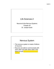 LS 2 Lec 6 Neurons