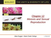 bio 101 chapter12 meiosis and sexual reproduction ppt