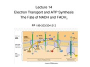 BB_LECTURE-14_Electron Transport and ATP synthesis