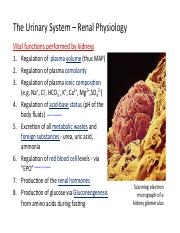 Bio2A03-Renal Lecture Notes 1 (1) - The'Urinary'System