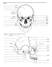 Skull and C-Spine Lab Images from Lab Manual