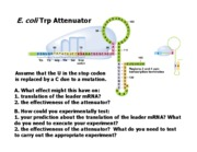 Antisense_RNA_and_global_regulation_ques
