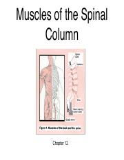 Spine-muscle.pdf