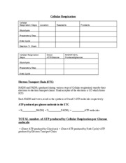 Cellular RespirationWorksheet 2