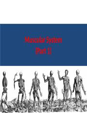 Muscular_System -- Part 1.pptx