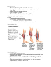 Skeletal Muscle Pump Notes