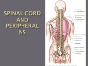 Spinalcord and PNS