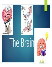 The Brain.pptx (Alexia Johnson).pptx