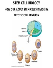 13_STEM_CELLS_MITOTIC_CELL_DIVISION_OUTLINE.ppt