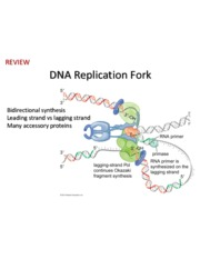 Lecture06 - Replication of DNA, Techniques in Molecular Biology, Review for Midterm I