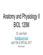 Lectures 19-20 Renal System BIOL120-S17 A&P II