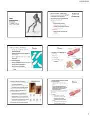 Outline Male Anatomy and Physiology F16.pdf