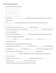 Urinary Physiology Worksheet